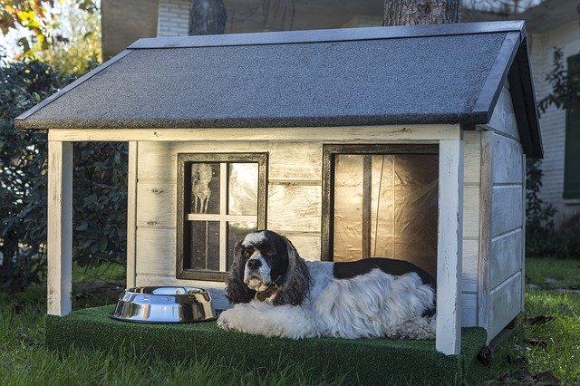otterhound breeders USA