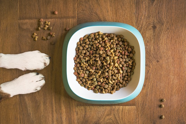 top rated dog food for large breeds