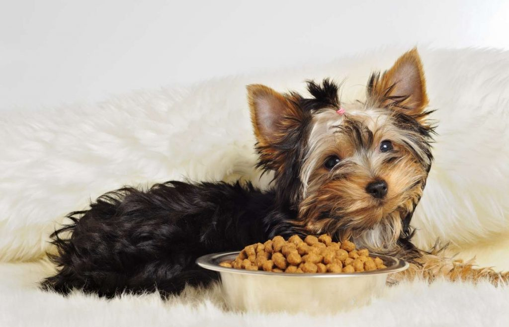 Yorkshire Terrier Otterhound Mix: Background and More